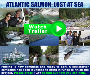 Lost at Sea: Atlantic Salmon